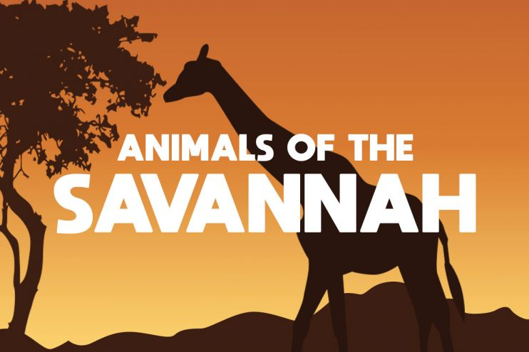 Animals of the savannah