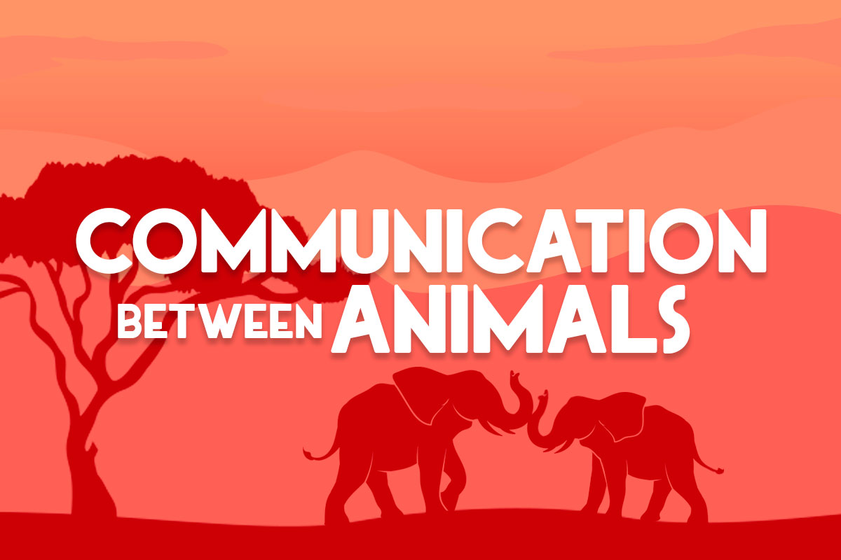 Communication between animals