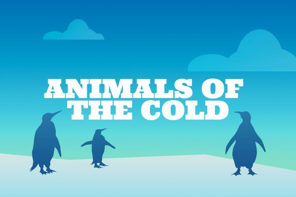 Animals of the Cold