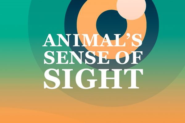 Animals' Sense of Sight