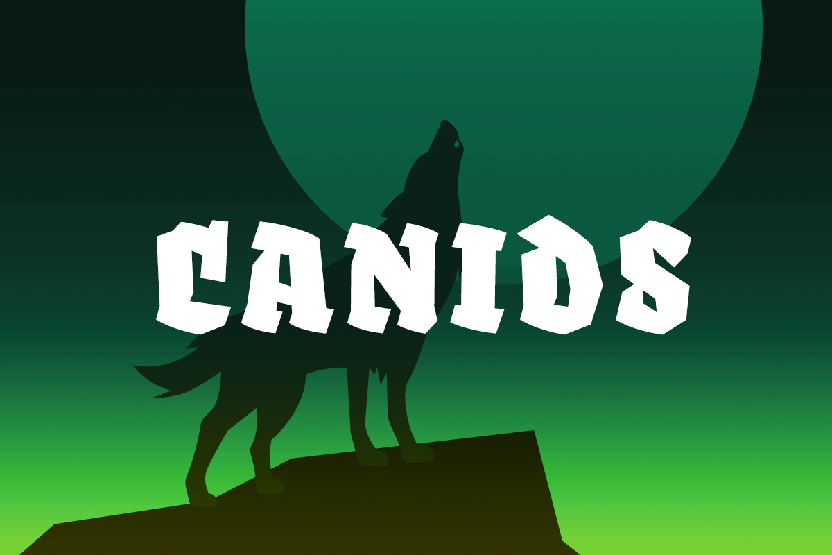 Canids