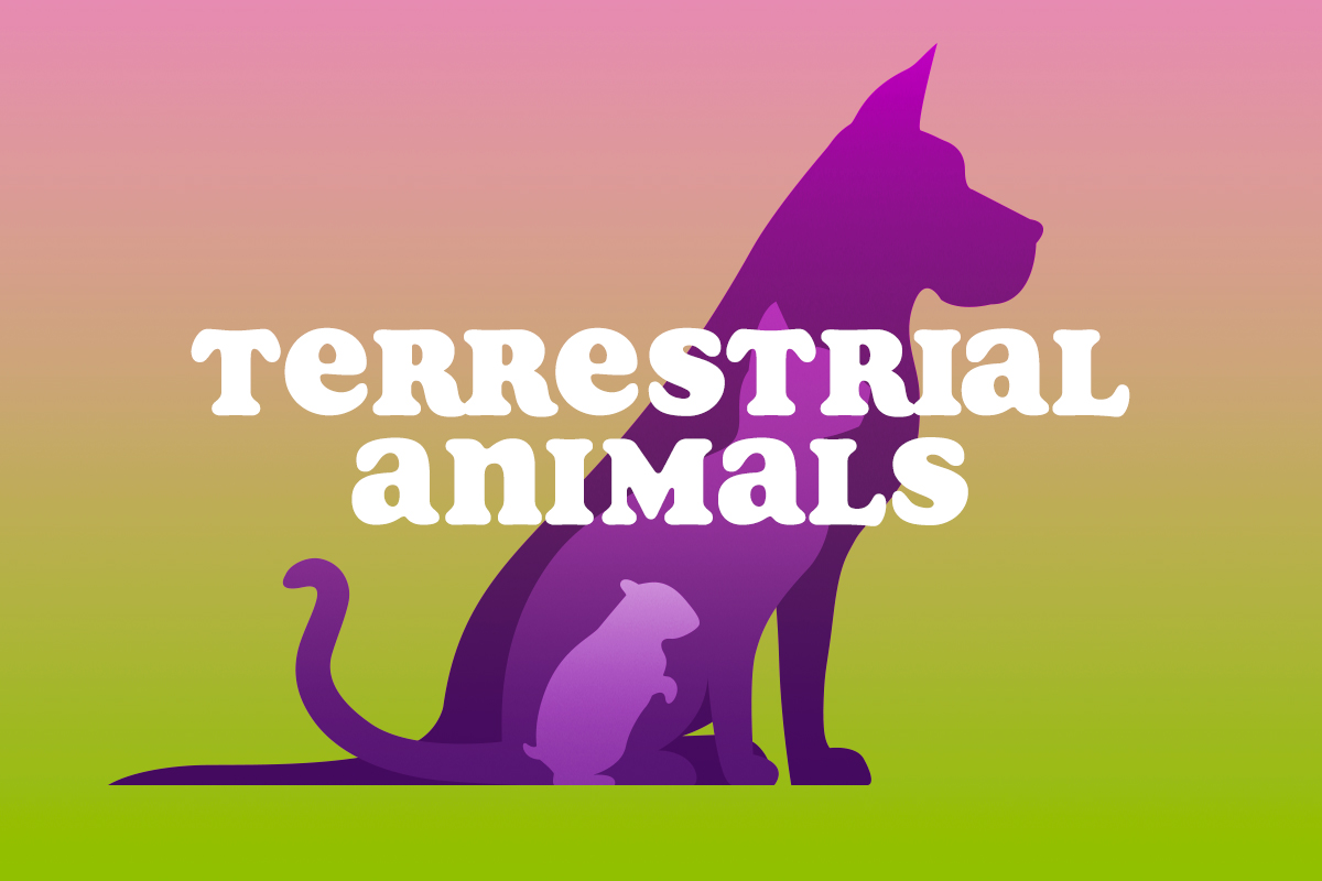 Terrestrial Animals