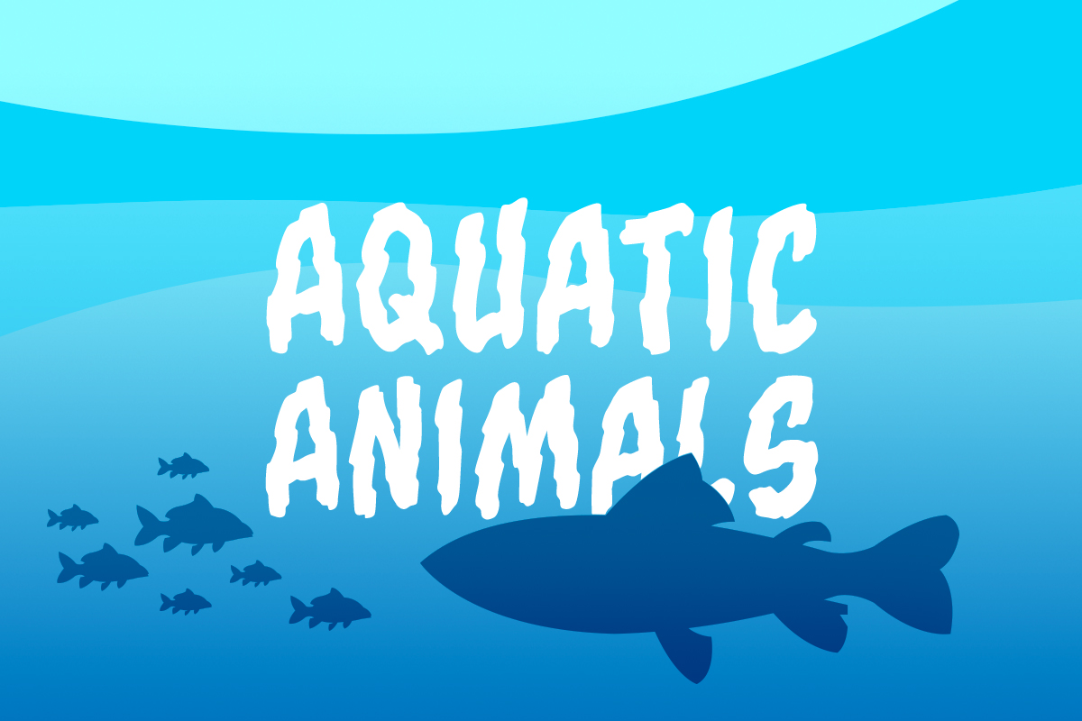 quipo quiz aquatic animals